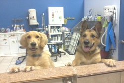 doggy daycare in south padre island texas