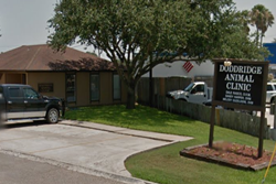 veterinarian in south padre island texas