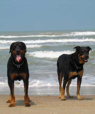 dogs in south padre