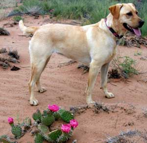 travel with dog in santa fe